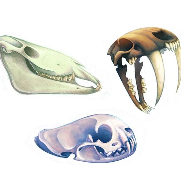 skull prev